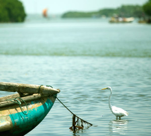 negombo-lagoon